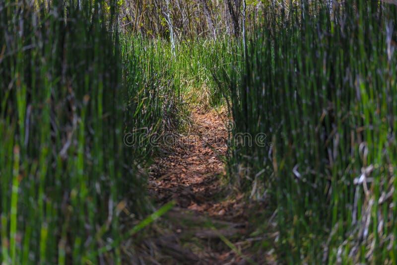Cañas de bambú en un camino durante un alza foto de archivo