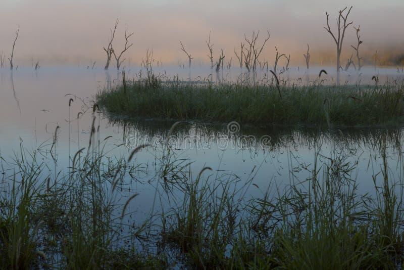 Cañas de la orilla del lago y árboles ahogados fotografía de archivo