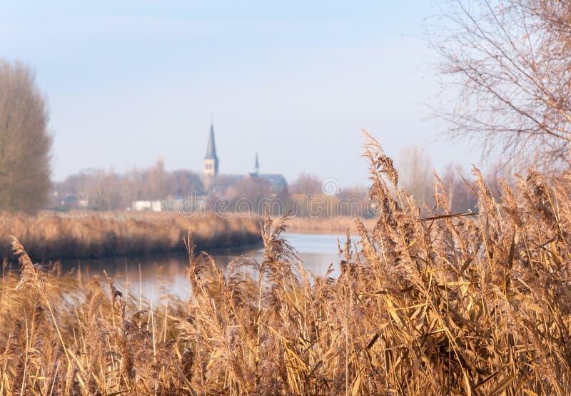 Cañas de oro y un pueblo holandés smal foto de archivo