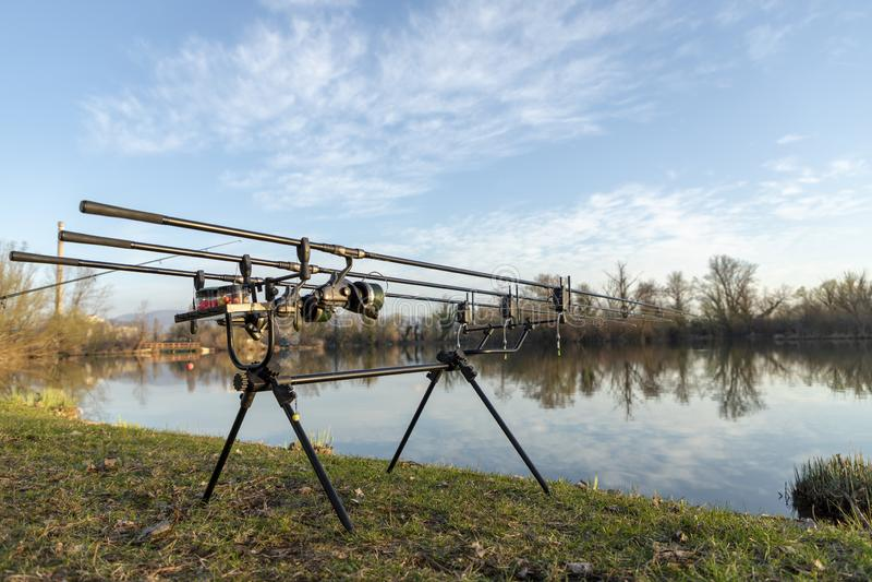 Cañas de pescar de la carpa en un lago fotografía de archivo