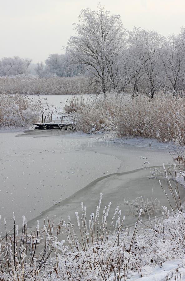 Cañas e hierba congeladas imagen de archivo