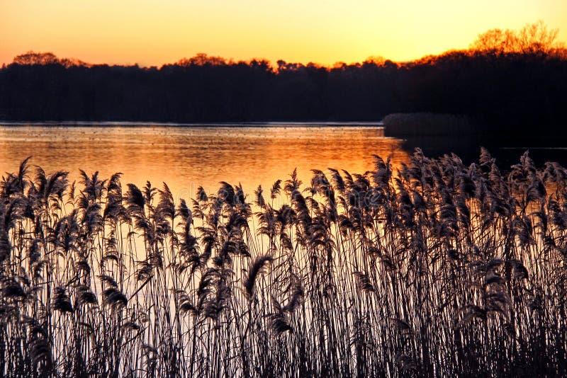 Cañas y acometidas en una batería de río en la puesta del sol foto de archivo libre de regalías
