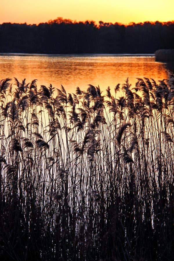 Cañas y acometidas en una batería de río en la puesta del sol imagenes de archivo