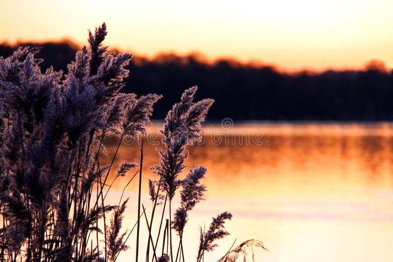 Cañas y acometidas en una batería de río en la puesta del sol fotos de archivo libres de regalías