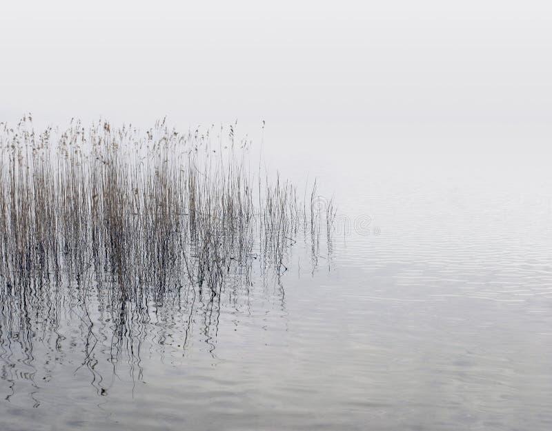Cañas y agua imagen de archivo