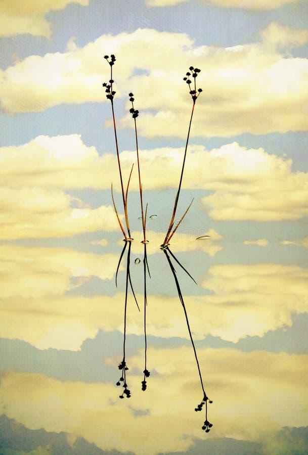Cañas y reflexiones en una charca inmóvil ilustración del vector
