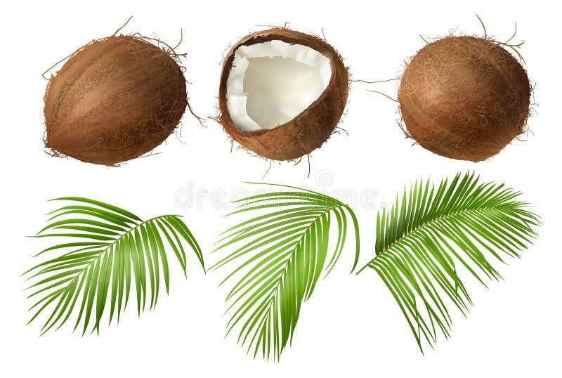 Cała i łamana coco dokrętka z zielonymi palmowymi liśćmi royalty ilustracja