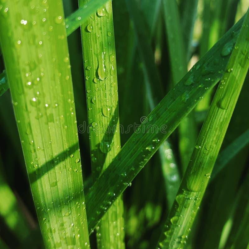 Całkowicie wspaniała trawa obrazy stock