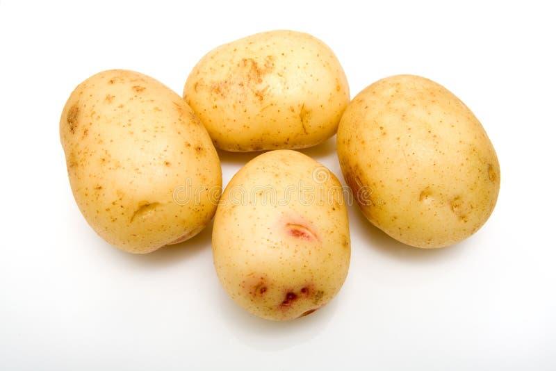 cały biały ziemniaka zdjęcia stock