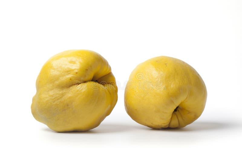 cały pigwy kolor żółty dwa obraz royalty free