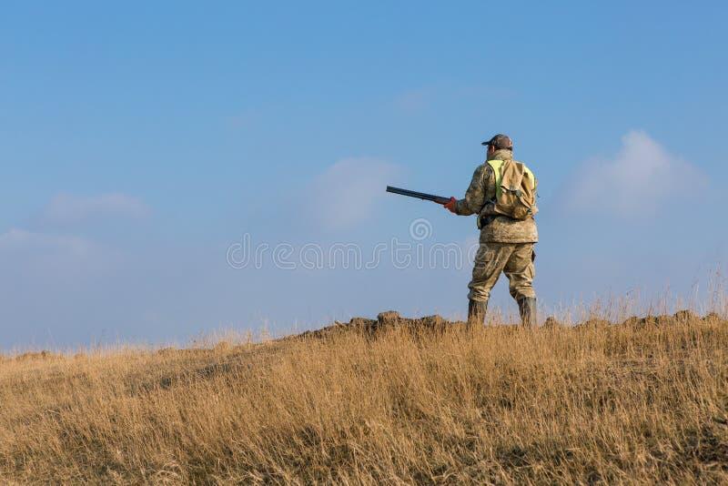 Ca?ador com uma arma e um drathaar alem?o Ca?a do pombo com c?es S imagem de stock royalty free