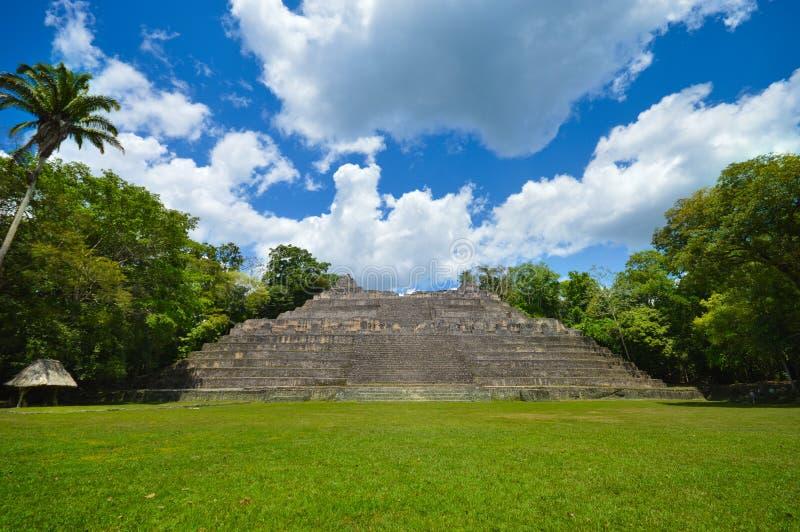 Caanapiramide bij de archeologische plaats van Caracol van Mayan beschaving in Westelijk Belize stock foto