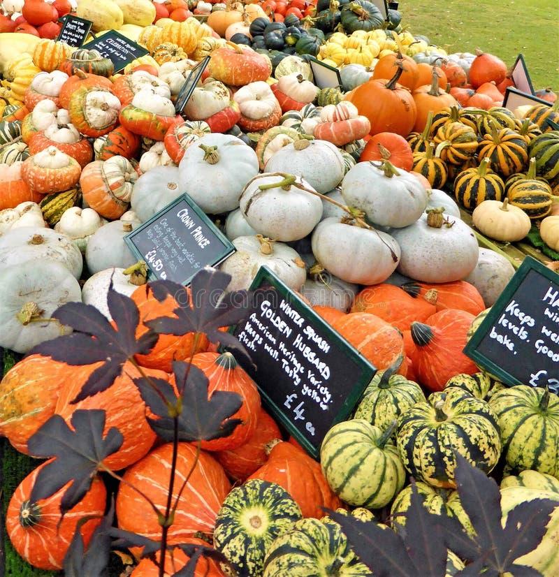 Cabaças diferentes brilhantemente coloridas do Ornamental de Autumnul foto de stock