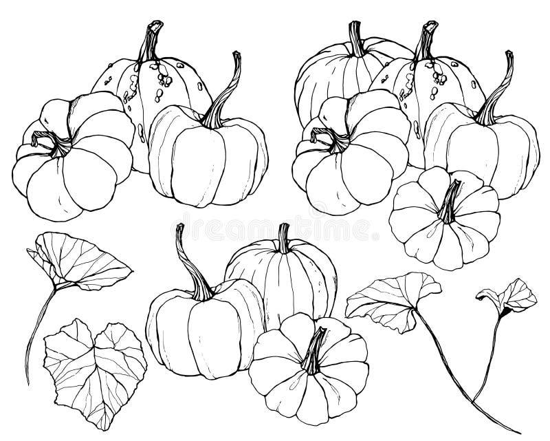 Cabaças do vetor ajustadas para o festival da colheita do outono Abóboras tradicionais pintados à mão com as folhas e os ramos is ilustração do vetor