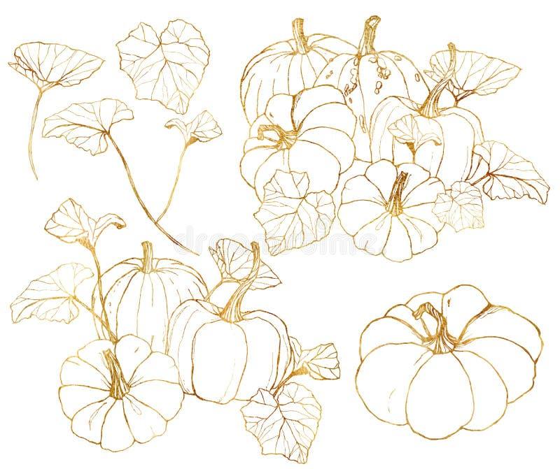 Cabaças douradas do vetor ajustadas para o festival da colheita do outono Abóboras tradicionais pintados à mão com folhas e ramos ilustração do vetor