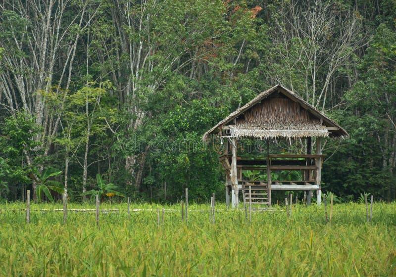 Cabaña del ` s del granjero establecida en el medio del campo imagen de archivo libre de regalías