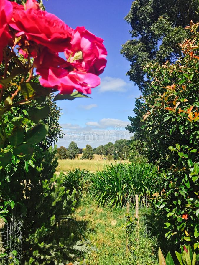 Cabaña Rose Garden del país foto de archivo libre de regalías