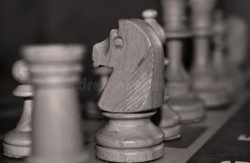 Caballero del ajedrez imágenes de archivo libres de regalías