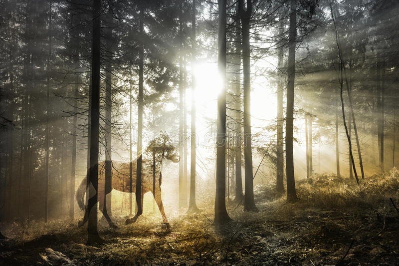 Caballo abstracto mágico en bosque de hadas fotos de archivo libres de regalías