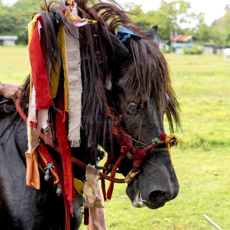 Caballo adornado en el festival de Pasola, Kodi, isla de Sumba, Nusa Tenggara foto de archivo