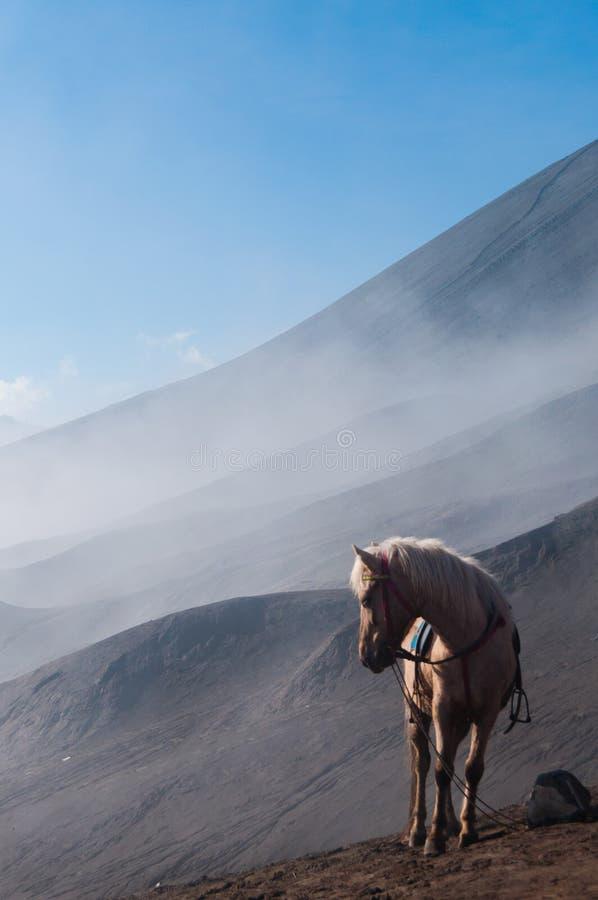 Caballo blanco delante de las montañas y del cielo azul foto de archivo