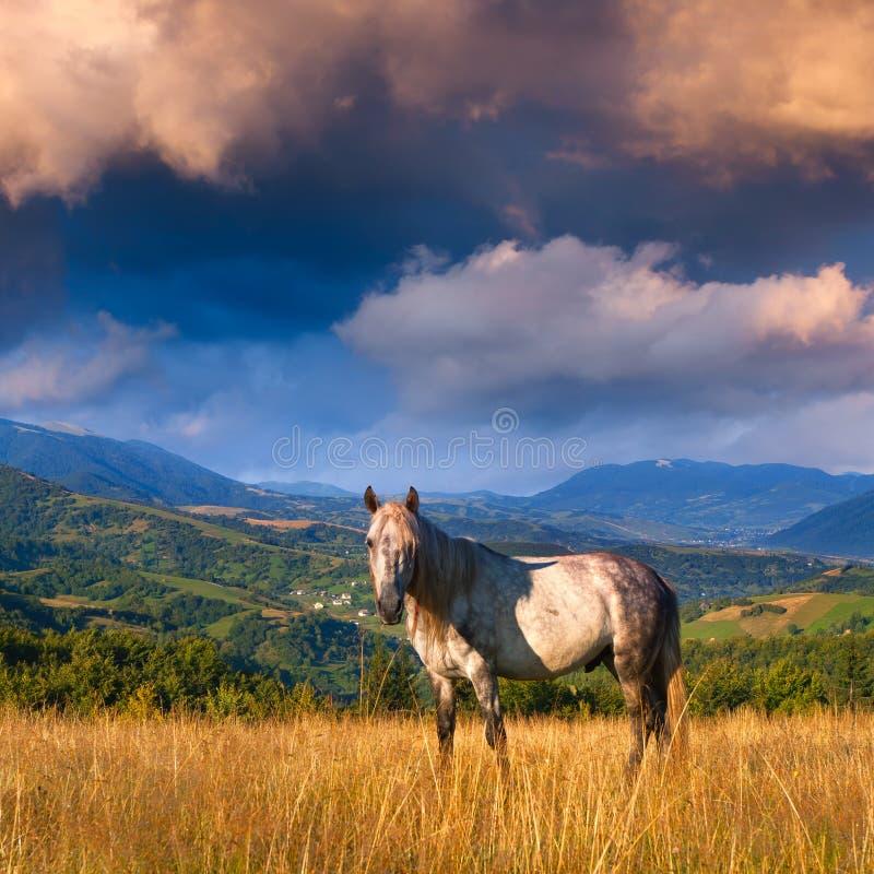 Caballo blanco en las montañas foto de archivo
