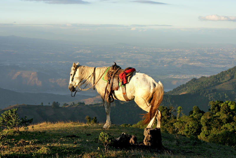 Caballo blanco en una colina cerca del volcán de ciudad de Guatemala Pacaya fotografía de archivo libre de regalías