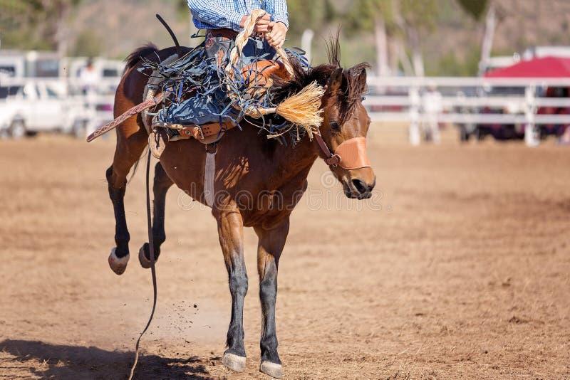 Caballo Bucking del caballo salvaje en el rodeo del país foto de archivo