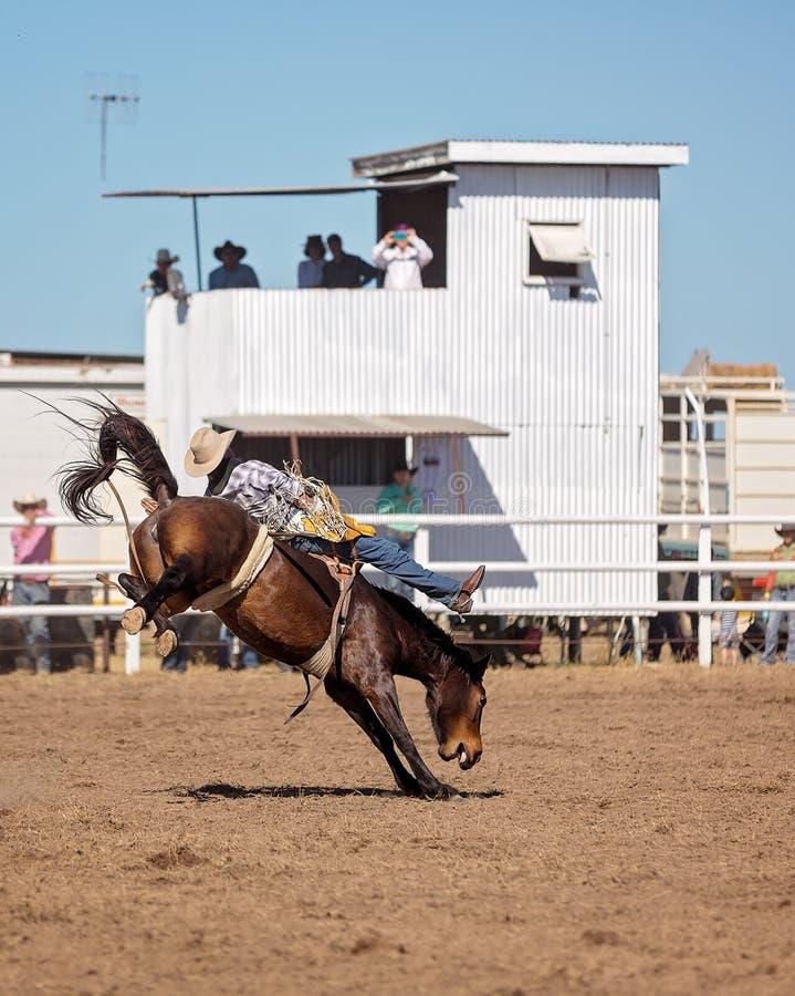Caballo Bucking del caballo salvaje en el rodeo del país foto de archivo libre de regalías