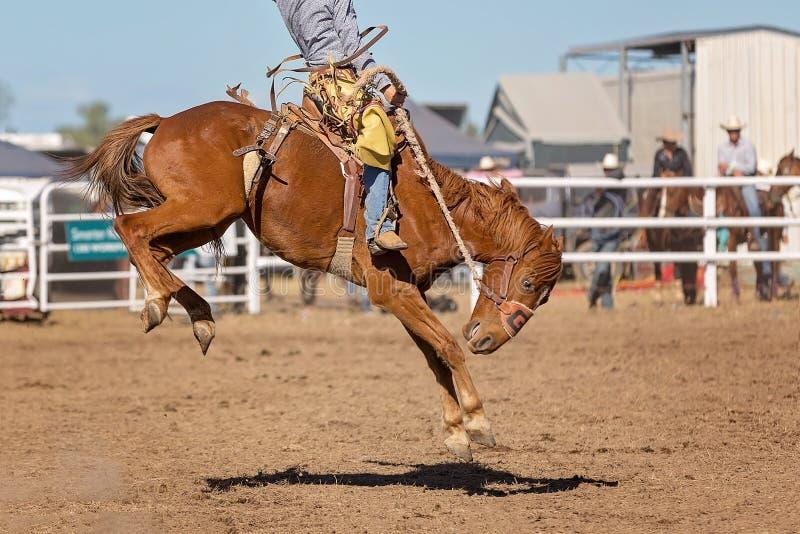 Caballo Bucking del caballo salvaje en el rodeo del país fotos de archivo