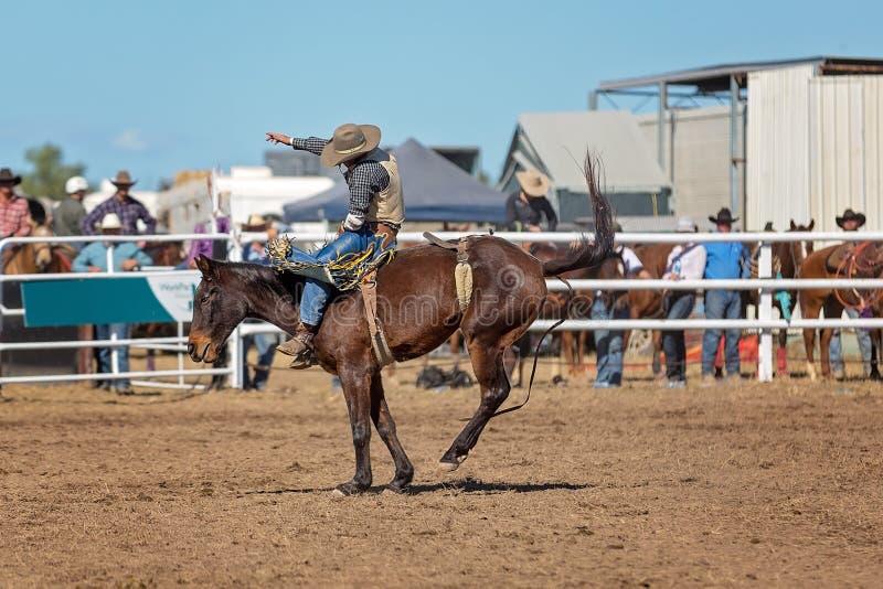 Caballo Bucking del caballo salvaje en el rodeo del país imagen de archivo libre de regalías