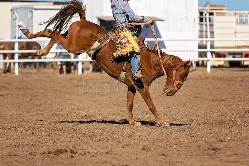 Caballo Bucking del caballo salvaje en el rodeo del país imagen de archivo