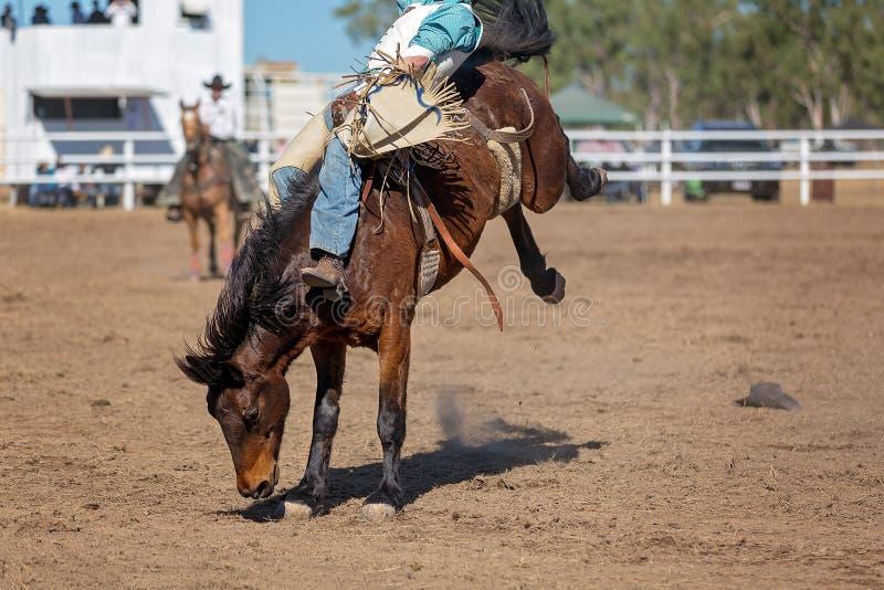Caballo Bucking del caballo salvaje en el rodeo del país fotografía de archivo