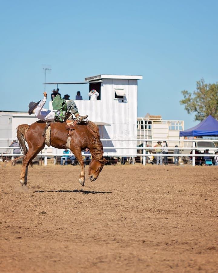 Caballo Bucking del caballo salvaje en el rodeo del país imágenes de archivo libres de regalías