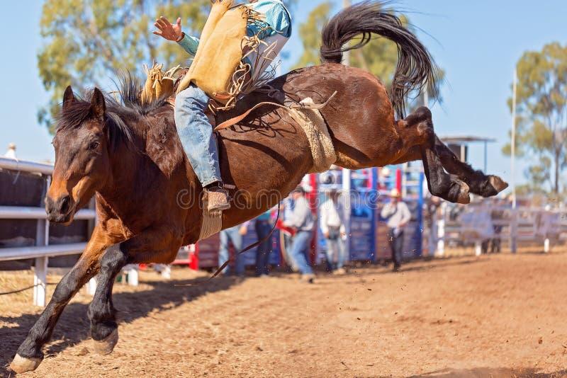 Caballo Bucking del caballo salvaje en el rodeo del país fotos de archivo libres de regalías