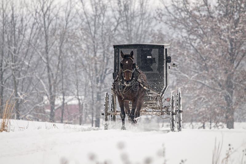 Caballo de Amish y con errores, nieve, tormenta imagenes de archivo