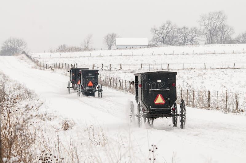 Caballo de Amish y con errores, nieve, tormenta foto de archivo