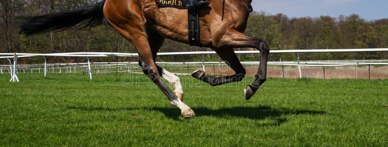 Caballo de carreras en pista de la hierba foto de archivo libre de regalías