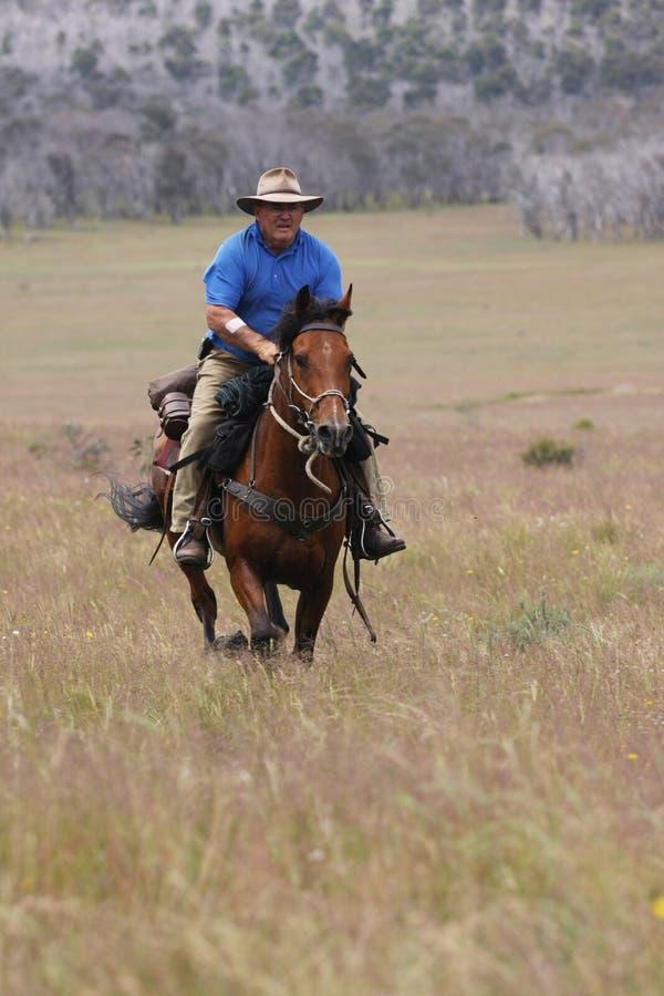 Caballo de montar a caballo del hombre a la velocidad fotos de archivo