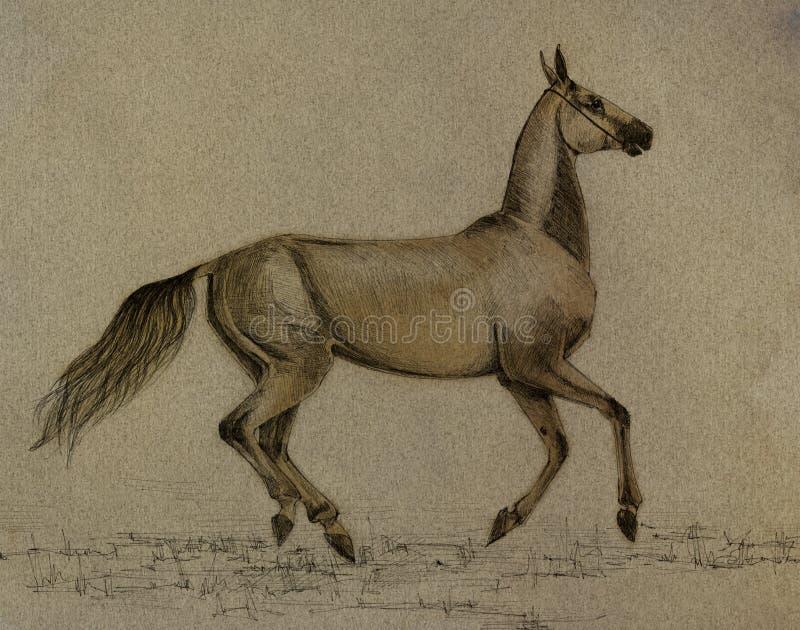 Caballo del akhal-teke del gráfico stock de ilustración
