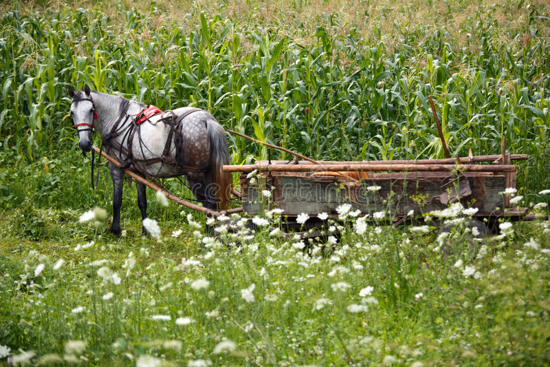 Caballo del granjero imagen de archivo libre de regalías