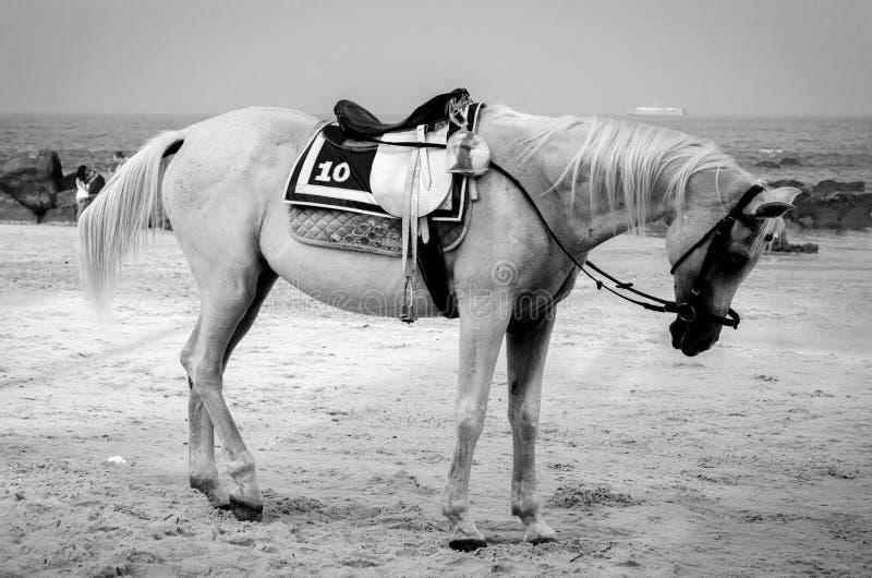 Caballo en blanco y negro. imagenes de archivo
