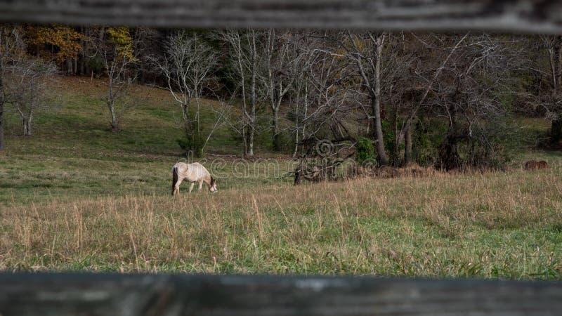 Caballo en campo que pasta fotos de archivo
