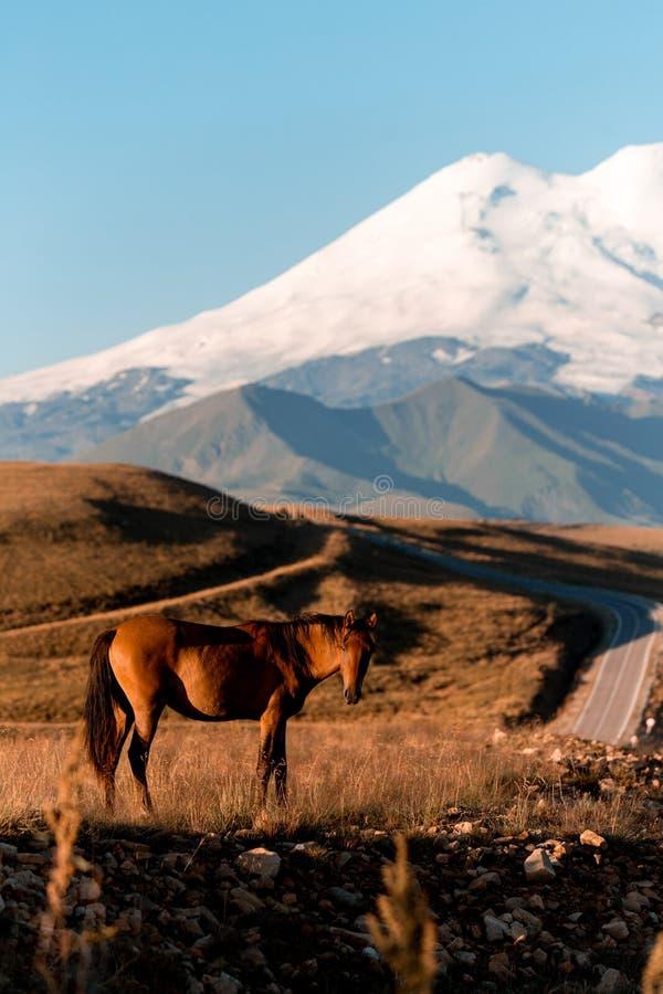 Caballo en el camino para refrescar la montaña con el sombrero del hielo El monte Elbrus fotografía de archivo libre de regalías