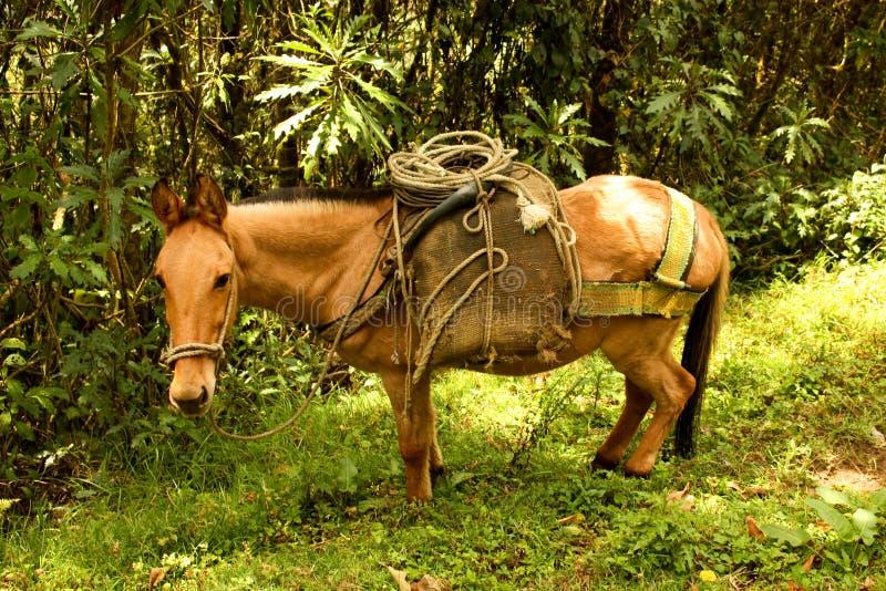 Caballo en el valle de Cocora foto de archivo libre de regalías