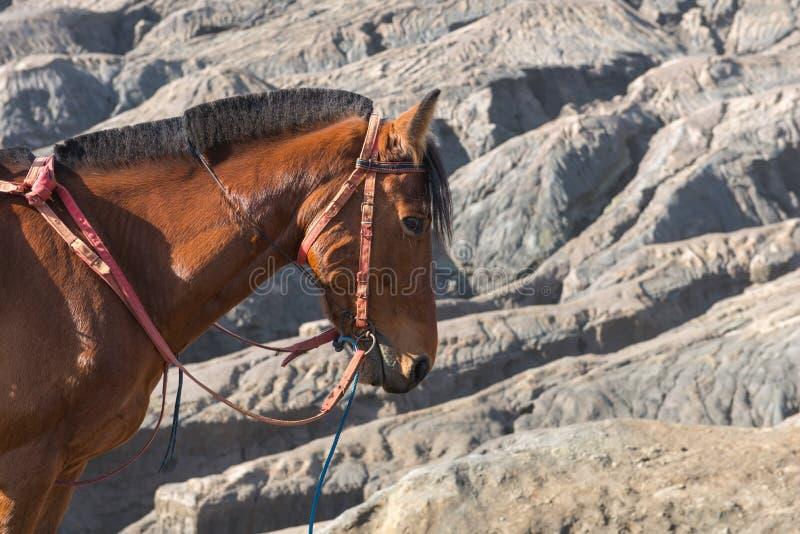 caballo en el volcán de Bromo del soporte y x28; Gunung Bromo& x29; en Bromo Tengger Sem fotografía de archivo libre de regalías
