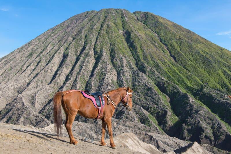 caballo en el volcán de Bromo del soporte y x28; Gunung Bromo& x29; en Bromo Tengger Sem foto de archivo libre de regalías