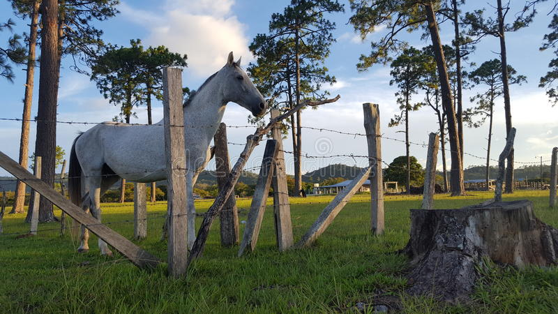 Caballo en establo. royalty free stock images