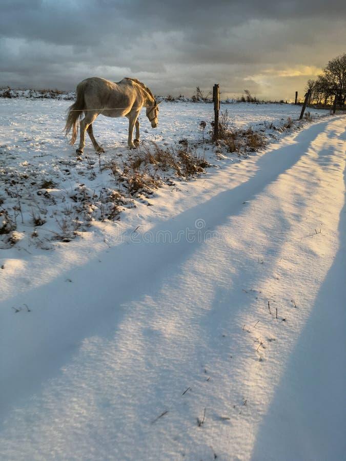 Caballo en invierno fotos de archivo libres de regalías