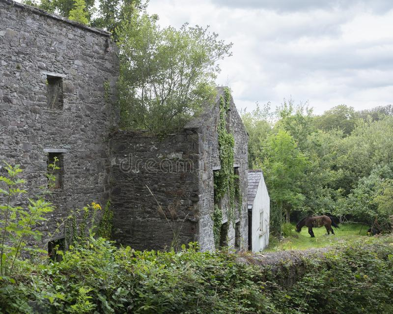 Caballo en jardín verde cerca de la ruina de casas viejas en kerry imagen de archivo